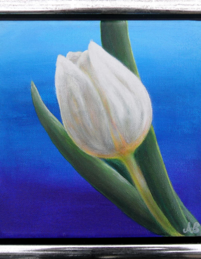 Tulip Crystal White